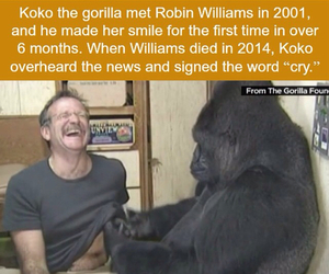 cry and robin williams image