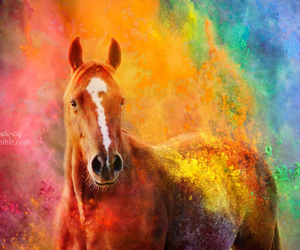 horse, colors, and holi image