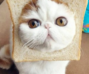 cat, bread, and funny image