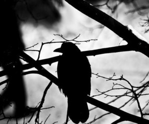 bird, black and white, and Darkness image