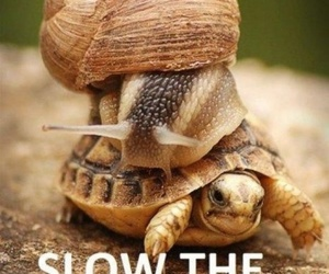 funny, slow, and turtle image