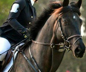 Image by Ali♥♡ horses
