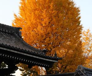 japan and tree image