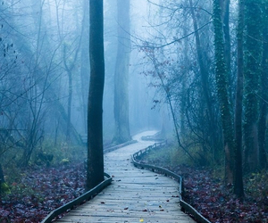 fog, photography, and tree image