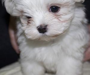 cachorro, cute, and dog image