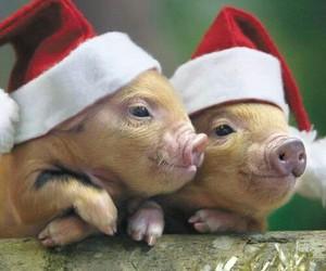 pig, animals, and christmas image