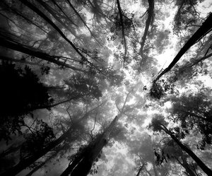 black and white, varnuak, and forest image