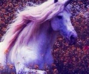 unicorn, background, and flowers image