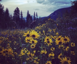 explore, flowers, and mountains image