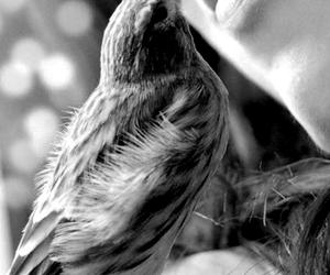 birdie, feelings, and kiss image