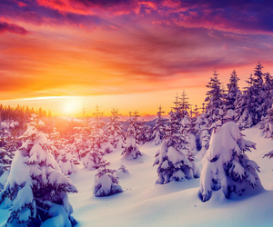 sunset, snow, and tree image