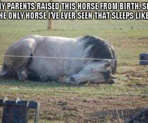 horse, funny, and cute image