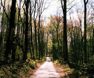 photography, vintage, and forest image