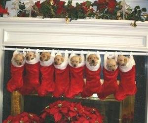adorable, christmas, and dog image
