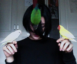 birds and pale image