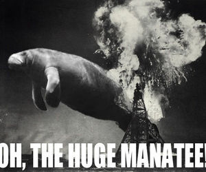 disaster, manatee, and funny image