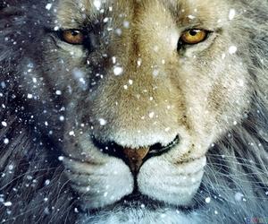 lion, narnia, and animal image