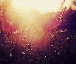 field, photography, and pretty image