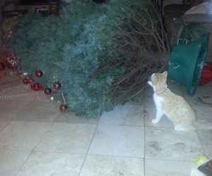christmas tree, travesuras, and cat image