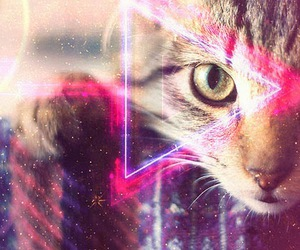 gato, universo, and hipster image