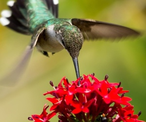 birds, nature, and flowers image