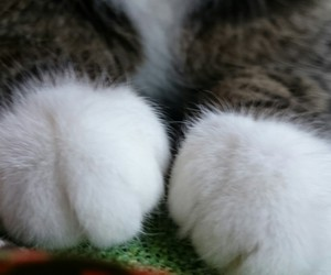 cat, cute, and gloves image