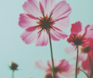 blue, blur, and flowers image