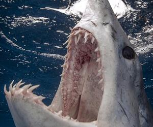 shark, sea, and animal image