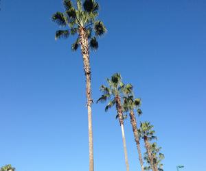beautiful, california, and christmas image