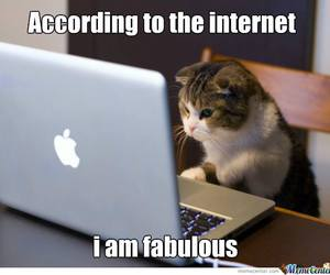 fabulous, funny, and kitty image