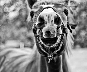 horse nose white dark image