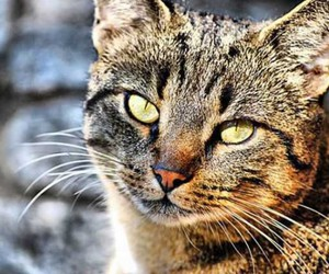 animal, hdr photography, and cute image