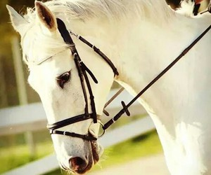 beauty, equestrian, and horse image