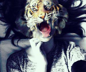 animal, river, and tiger image