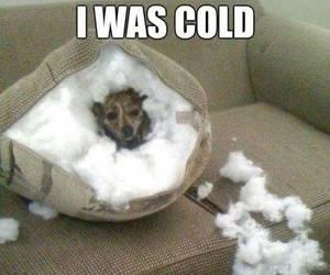 dog, funny, and igloo image