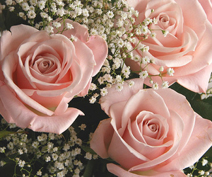 flowers, rose, and roze image