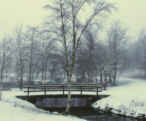 winter, bridge, and photography image