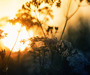 light, sun, and nature image