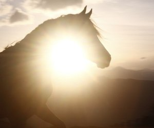 beautiful, dreamy, and horse image