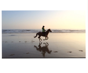 beach, chestnut, and equestrian image