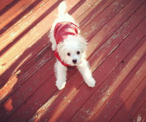 christmas sweater, baby puppy, and cute image