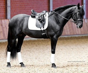 horse, beautiful, and black image