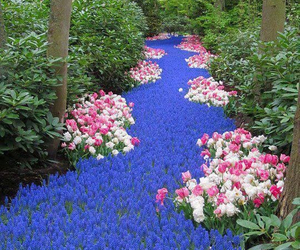 flowers, nature, and river image