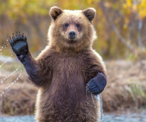 animals, bear, and hello image