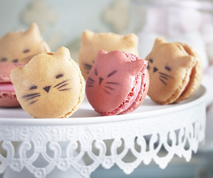 cat, macaron, and food image