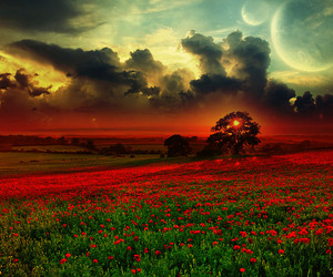 flowers, moon, and photography image