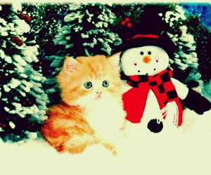 adorable, merrychristmas, and cat image