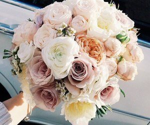 flowers, rose, and like image