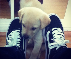 dog, cute, and vans image