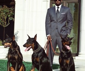 dog, doberman, and man image